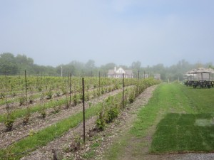 Sandbanks Estate Winery -- Fog Rolling In IMG_2955